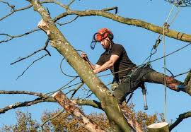 Tree surgeon improves more growth to the tree
